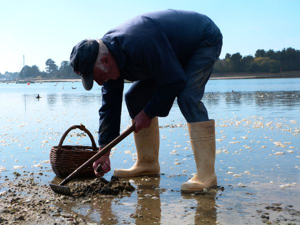 pêche à pied Bretagne Nord